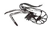 テナガエビ